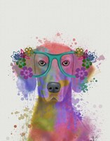 Rainbow Splash Weimaraner, Portrait Fine Art Print
