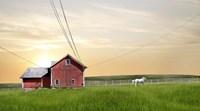 Farm & Country IV Fine Art Print