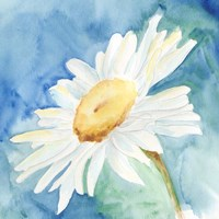 Daisy Sunshine I Fine Art Print