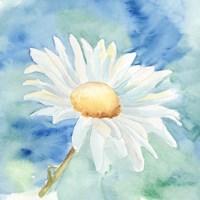 Daisy Sunshine II Fine Art Print