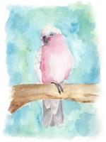 Sweet Tropical Bird III Framed Print