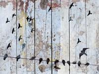 Birds on Wood III Framed Print