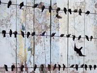 Birds on Wood IV Framed Print