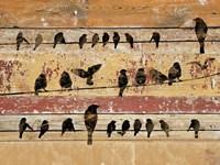Birds on Wood V Framed Print