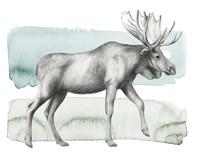 Animale III Framed Print