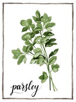 Watercolor Herbs II Fine Art Print