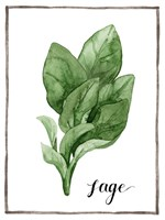 Watercolor Herbs VI Fine Art Print
