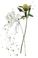 Botany Flower I Framed Print