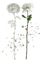 Botany Flower IV Framed Print