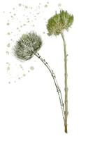 Botany Flower V Framed Print