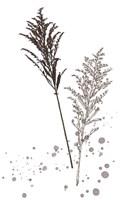 Botany Flower VI Framed Print