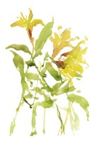 Watercolor Lilies I Fine Art Print