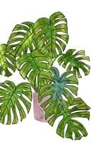 Potted Jungle I Framed Print
