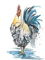 Rooster Splash II Fine Art Print