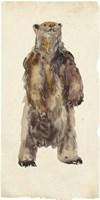 Brown Bear Stare I Framed Print