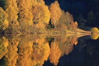 Autumn Reflection Fine Art Print