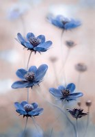 Cosmos Blue Fine Art Print