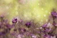 Purple Dream Fine Art Print