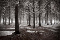The Onset Of Winter Fine Art Print