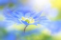 Wind Flower Fine Art Print