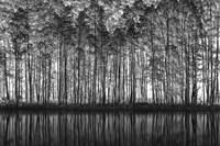 Pointillism Nature Fine Art Print