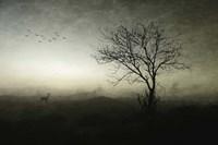 Dawn Fine Art Print