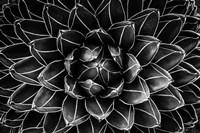 Natural Math Fine Art Print