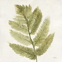 Forest Ferns I Fine Art Print