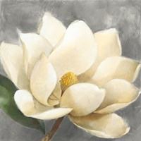 Magnolia Blossom on Gray Fine Art Print