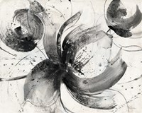 Bold III Fine Art Print