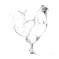 Rooster II Dark Square Fine Art Print
