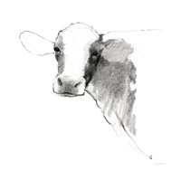 Cow II Dark Square Fine Art Print