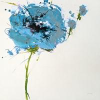 Turquoise Poppy Master on White Framed Print