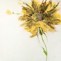 Yellow Daisy on White Framed Print