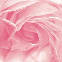 Georgia Pink Fine Art Print