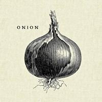 Linen Vegetable BW Sketch Onion Fine Art Print