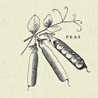 Linen Vegetable BW Sketch Peas Fine Art Print
