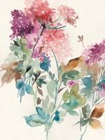 Sweet Hydrangea I Fine Art Print