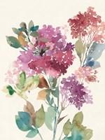 Sweet Hydrangea II Framed Print