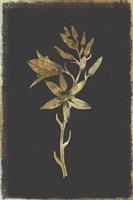 Botanical Gold on Black I Fine Art Print