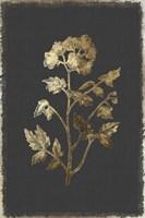 Botanical Gold on Black II Fine Art Print