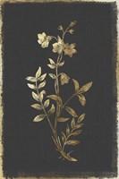 Botanical Gold on Black IV Fine Art Print