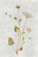 Botanical Gold on White I Fine Art Print