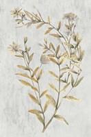 Botanical Gold on White II Fine Art Print