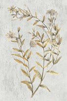 Botanical Gold on White II Fine Art Print