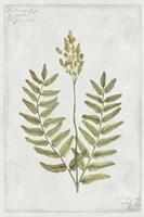 Botanical VI Fine Art Print