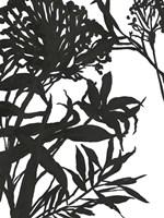 Monochrome Foliage I Fine Art Print