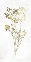 Gold Botanical II Fine Art Print