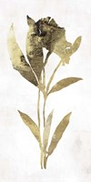 Gold Botanical III Fine Art Print