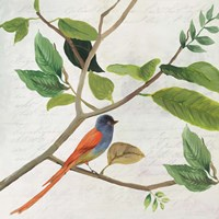 Singing Bird II Fine Art Print